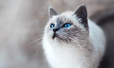Jak wybrać drapak dla kota?